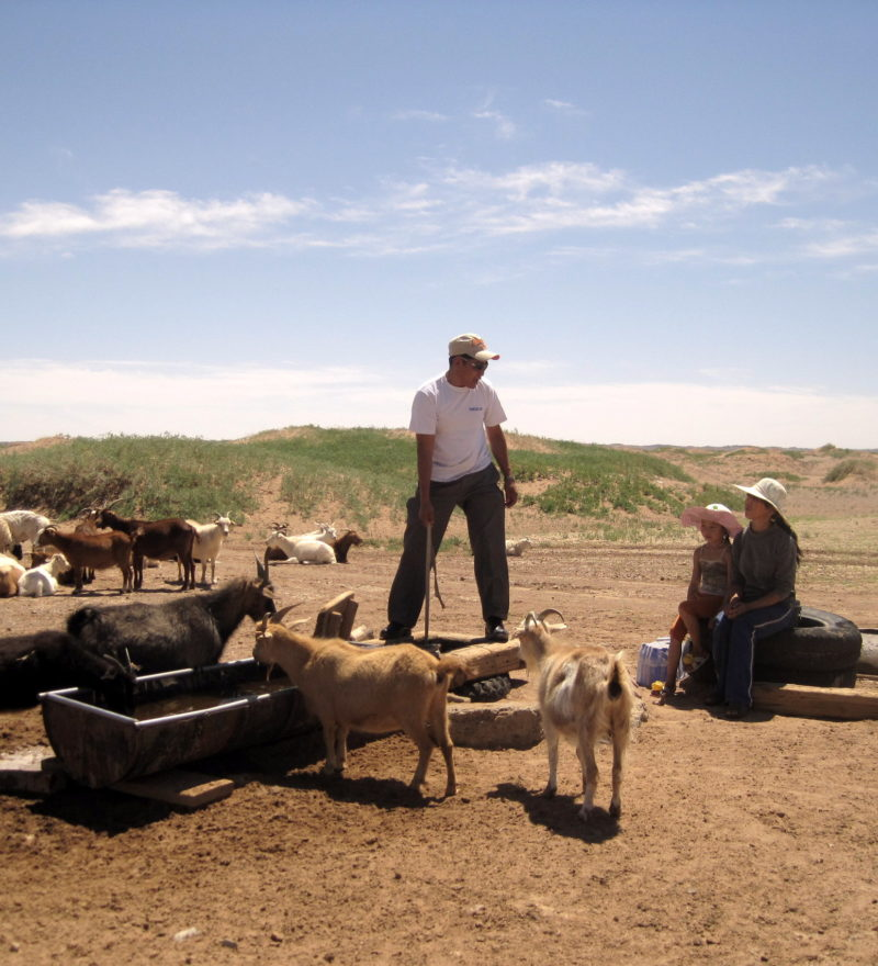 herder with goats and sheep